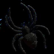 spider-2861825_960_720