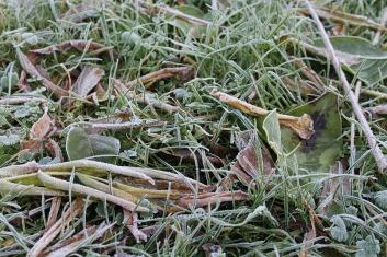 ground-frost-2960704_960_720